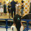 2016日本滞在記⑪ 日本その他雑感