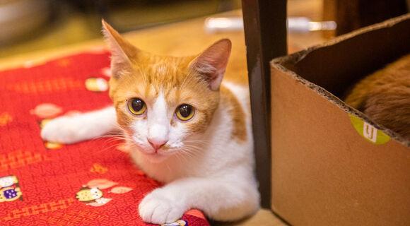 こんばんは、はるです。新橋の猫好きなおっちゃんたちが集まってくる「家庭料理てまり」で店番してます