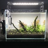 36cm水槽で水草レイアウトを作りました!【第3弾、3話完結】