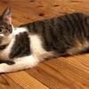 ネコの何歳は、人間の何歳にあたるという表現