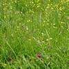 ゆがみのない保護めがねを見つけた 〜草刈りやチェーンソーから目を守るために〜