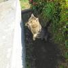 5月後半の #ねこ #cat #猫 その1