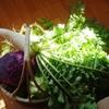 かっちゃんちの地野菜。