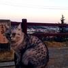 広島旅行2日目:猫と坂と古寺のまち、尾道編
