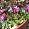 大好きな春が来る前にやってくる、むかつく花粉症です