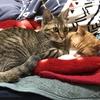 【猫ブログ】たかしとサラは仲いいの?5