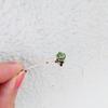 まるで小さなバラのようなミセバヤの挿し芽20190218
