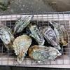 牡蛎~~~