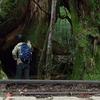 【山道を歩こう】縄文杉を目指して屋久島の原生林を一人で歩く