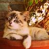 アトピーはペットを飼える?犬猫飼ってたぼくがペットとの付き合い方とアトピー悪化の原因を話す
