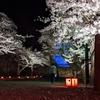 【桜満開】会津に住むおじさんが歩いて鶴ヶ城に夜桜を見に行った話。【お花見】