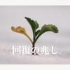 【回復】2021年2月1−5日【ベトナム株投資】