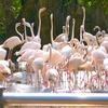 タイの動物園(サファリワールド再)