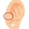 耳に穴が2個ある!!