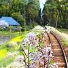 小湊鐡道 里山トロッコ⑧ 有名な飯給駅風景を車内から^^