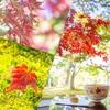 「味わいたい秋」の経過観察