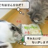 猫雑記 ~すずめの家事お手伝い~