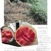 微生物は凄い!!!スイカ畑に除草剤を散布されてしまったそうなのですが‼    自然微生物農法