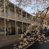 木屋町のサクラ〜 #kyoto   #サクラ #木屋町