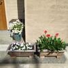 玄関ポーチの花と、無印良品のガーデンチェア