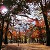 仙台へ黄葉と紅葉を