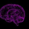 発達障害は治らない?発達障害の脳、可塑性を活かす家庭での工夫