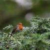 英国のかわいい野鳥たち🇬🇧