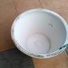 白メダカを睡蓮鉢へ