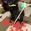 甲斐犬サンの連休2日目〜黒帯ト戦ウッ!(ง `ω´)۶!