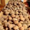 里芋を食べて無病息災 館山・茂名の里芋まつり