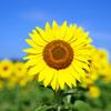 kin200 黄色い太陽 黄色い戦士 音5