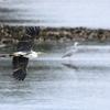 水辺の鳥...
