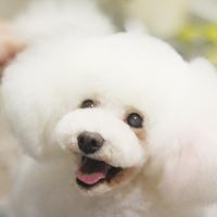 【NEW OPEN】金沢市南新保町に「Dogsalon Colche(コルチェ)」がオープン!