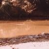 毎日更新 1983年 バックトゥザ 昭和58年8月21日 オーストラリア一周 バイク旅 58日目 23歳 偶然再会 水泳三昧 ヤマハXS250  ワーキングホリデー ワーホリ  タイムスリップブログ シンクロ 終活