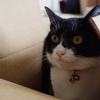 今日の黒猫モモ&白黒猫ナナの動画ー1012