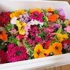 梶谷農園のカジヤスゴイハーブBoxの購入レポ!お花のサラダが最高に可愛い!
