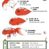 金魚ちょうちんリーフ、韓国語版と中国語版が完成!