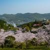 針木浄水場の桜 2021.3.29