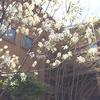 わが家の春の花