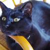 今日の黒猫モモ&白黒猫ナナの動画ー1005