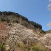 満開を迎えた奈良県曽爾村・屏風岩公苑のヤマザクラ