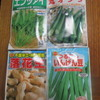 オクラ、落花生、いんげん種蒔き
