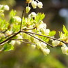 α100でお写んぽカメラ春の花たち