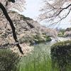 桜とエクレア