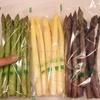 【ふるさと納税】その他食品⑮〜『3色のアスパラ』を食べ比べてみよう! 北海道遠別町〜