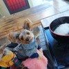 松本城まで徒歩1分!犬連れOKなお蕎麦屋さん【やまが】