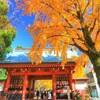 葛飾八幡宮の黄葉