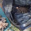 薪の取り込み 今年最後なのかな 屑薪やね Taking in firewood it will be the last in this year Roof of waste firewood