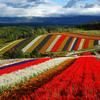 美瑛町の四季彩の丘は、9月でも美しさが全開なのだ