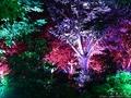 銀座SIXから見る夜景とチームラボによる「呼応する木々」